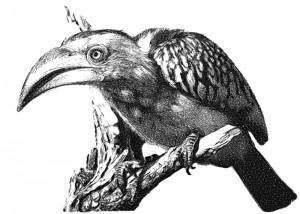 eDavid_bird